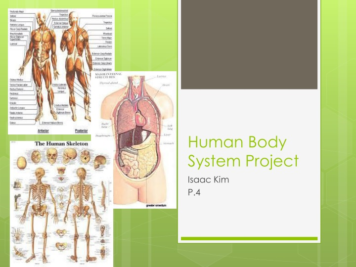 human body system project n.