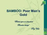 BAMBOO:  Poor Man's Gold