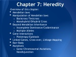 Chapter 7: Heredity