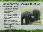 Chimpanzee Social Structure