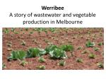Werribee A story of wastewater and vegetable production in Melbourne