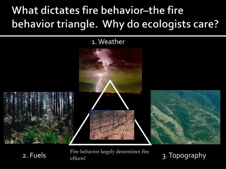 what dictates fire behavior the fire behavior triangle why do ecologists care n.