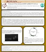 Production Of Recombinant  hGDNF In HEK293T Cell  Line