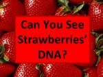 Can You See Strawberries' DNA?
