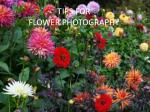 TIPS FOR FLOWER PHOTOGRAPHY