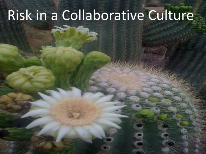 risk in a collaborative culture n.