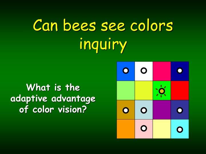 can bees see colors inquiry n.