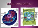 Cell Organelle s