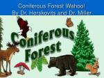 Coniferous Forest Wahoo! By Dr. Herskovits and Dr. Miller