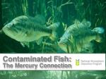 Contaminated Fish: The Mercury Connection