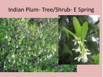 Indian Plum- Tree/Shrub- E Spring