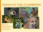 FERALS IN THE  CLASSROOM
