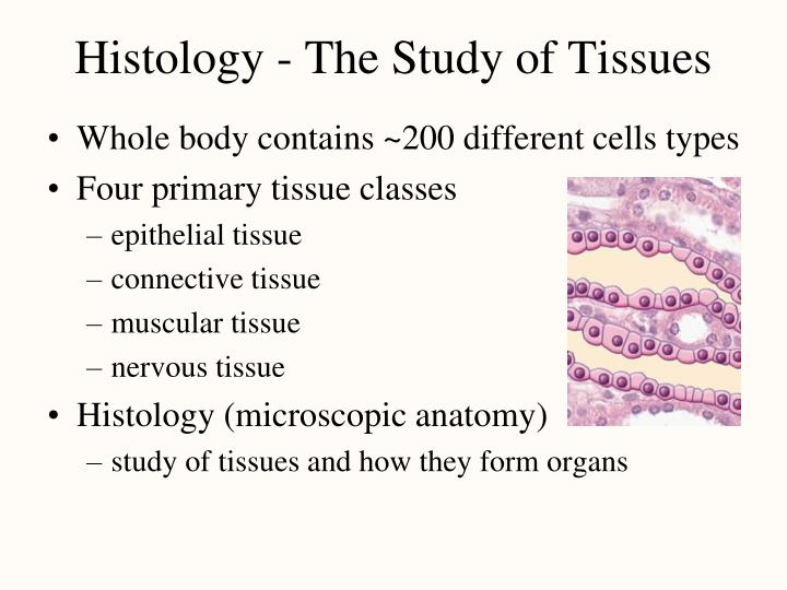 histology the study of tissues n.