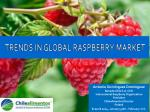 TRENDS IN GLOBAL RASPBERRY MARKET