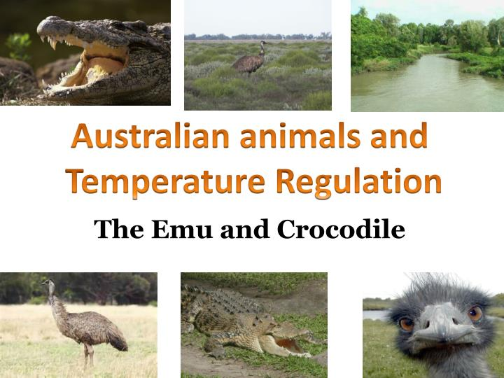 the emu and crocodile n.
