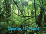Chapter 22: Plants