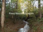 Piney Woods Ecoregion