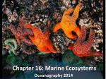 Chapter 16: Marine Ecosystems