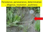 Persistence, perseverance, determination , diligence, resolution , pushiness