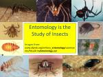 Entomology is the Study of Insects