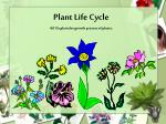 Plant Life Cycle 4.01 Explain the growth process of plants .