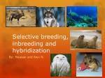 Selective breeding, inbreeding and hybridization