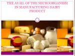 THE AVAIL OF THE MICROORGANISM IN MANUFACTURING DAIRY PRODUCT