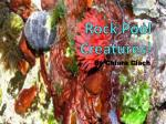 Rock Pool Creatures!