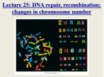 Lecture 25: DNA repair, recombination; changes in chromosome number