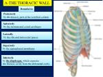A-THE THORACIC WALL