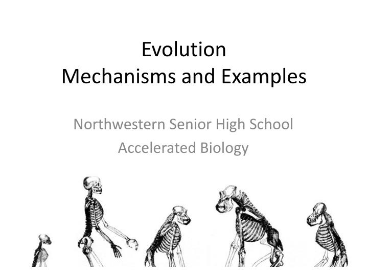 evolution mechanisms and examples n.