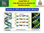 Section A: DNA as the Genetic Material