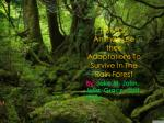 How Do Animals use their Adaptations To Survive In The Rain Forest