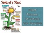 Plant  Tissues, Structure and Function