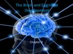 The Brain and Cognitive Development