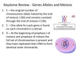 Keystone Review - Genes Alleles and Meiosis