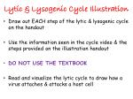 Lytic & Lysogenic Cycle Illustration