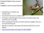 Common Name: Ruby-crowned  kinglet Category: passerine (perching birds)