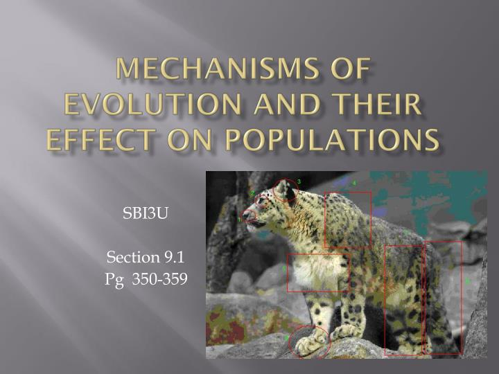 mechanisms of evolution and their effect on populations n.