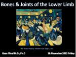 Bones & Joints of the Lower Limb