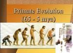 Primate Evolution (65 - 5 mya)