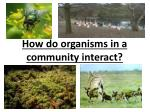 How do organisms in a community interact?
