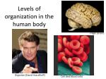 Levels of organization in the human body