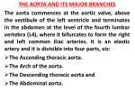 THE AORTA AND ITS MAJOR BRANCHES