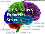 The Nervous & Endocrine Systems