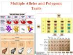 Multiple  Alleles and Polygenic Traits