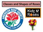 Classes and Shapes of Roses