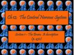 Ch  12:  The Central Nervous System