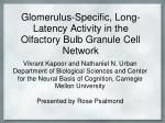 Glomerulus -Specific, Long-Latency Activity in the Olfactory Bulb Granule Cell Network