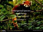 Endangered Species : Red Panda (Ailurus Fulgens)